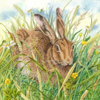 Brown Hare, a painting by Lynne Henderson