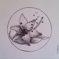 Lotus, a drawing by Megan Coetzee