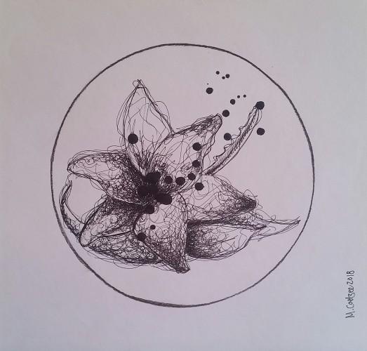 Lotus, a drawing by Megan Coetzee