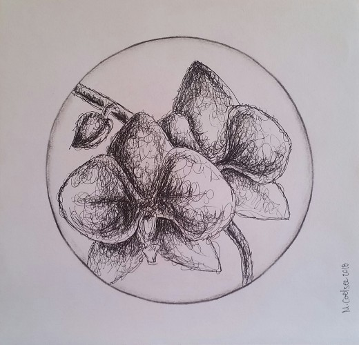 Orchid, a drawing by Megan Coetzee