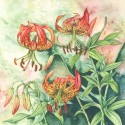 Panther Lily, a painting by Lynne Henderson
